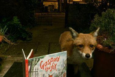 Gaspard the fox reads his book